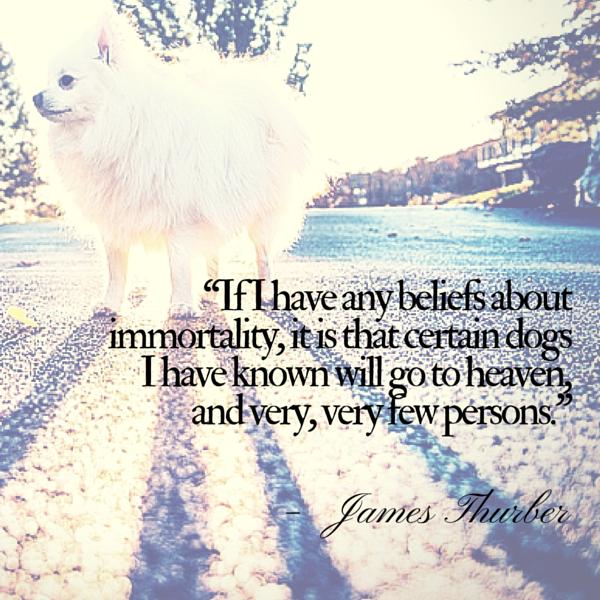 Cita del perro Thurber