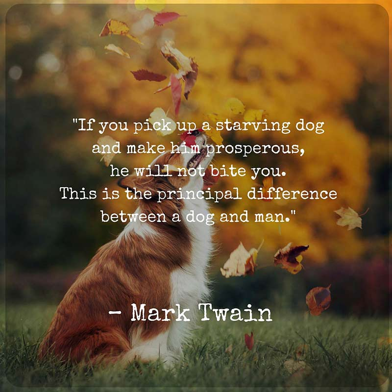 Cita de Twain